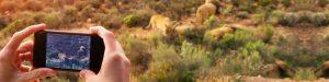 smartphone qui filme des lions